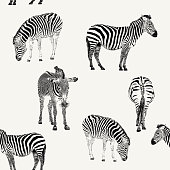 Zebra Repeat Pattern