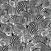 Zebra seamless pattern. Wild animal texture.