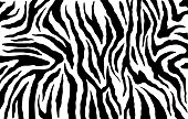 Zebra skin, stripes pattern. Animal print. Black and white background. Vector texture.