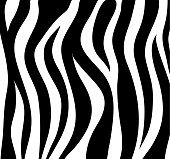 Zebra stripes black and white abstract background as skin. Vector Illustration