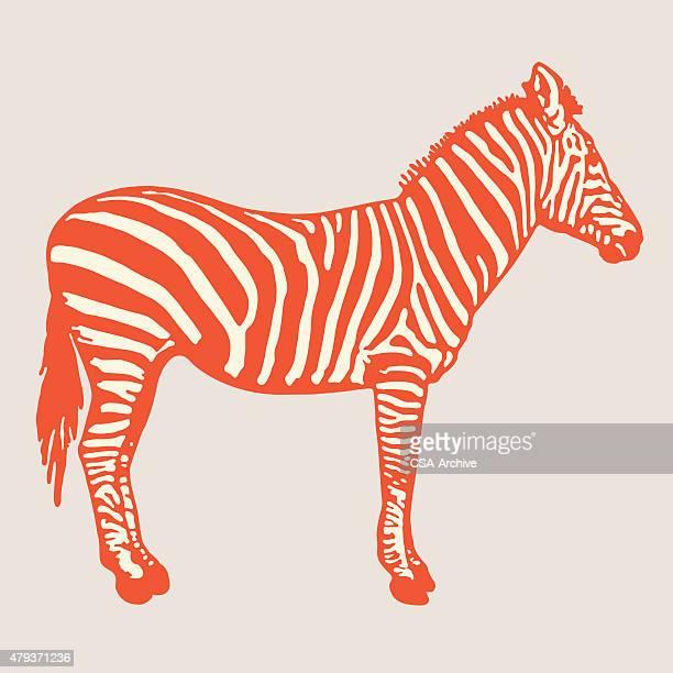 zebra - zebra stock-grafiken, -clipart, -cartoons und -symbole