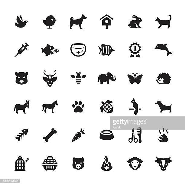 zoo and pets vector symbols and icons - pet equipment stock illustrations, clip art, cartoons, & icons