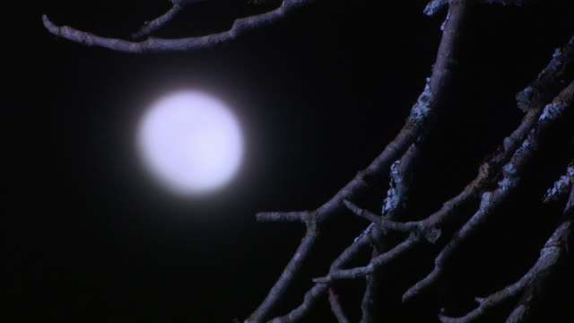 stockvideo's en b-roll-footage met medium  angle of moon rising in night sky. bare tree branches in fg. - bare tree