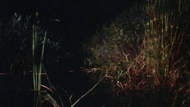 vídeos y material grabado en eventos de stock de medium angle of marsh surrounded with plants and shrubs. at end man enter screen from right. - marisma