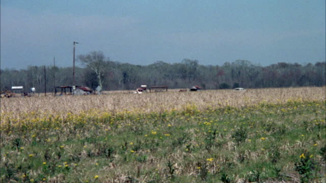 tracking shot of white car driving along rural road. prairie grass and wildflowers present in foreground and obstruct view of car. farm machinery and farmhouse present in background. - prairie stock videos and b-roll footage
