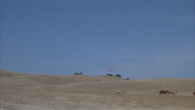 WIDE ANGLE OF DESERT PLAINS AND THREE COWS MOVING ACROSS TO RIGHT. RED BIPLANE APPEARS IN DISTANCE IN CENTER, FLIES ABOVE AND OVER BARN. SEE PLANE EXHAUST COVERING SHOT. EXHAUST FADES AND SEE BARN WITH FENCE.