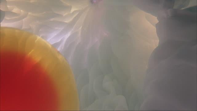 close angle of uterus. ovarian egg in left corner. sperm swim from top to egg at bottom. human body. - 卵巣点の映像素材/bロール
