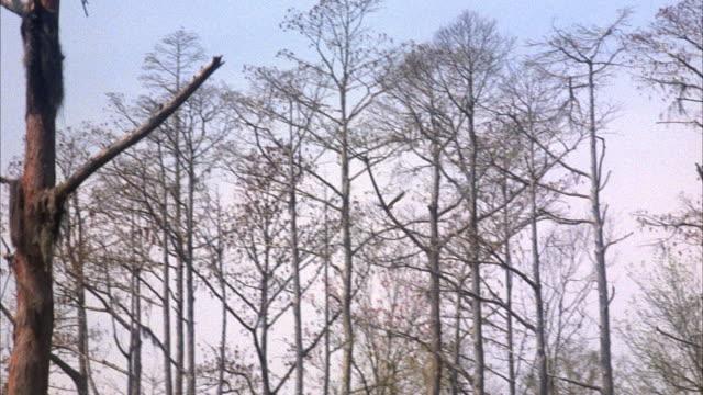 medium angle tracking shot of bird flying left to right through trees in forest. tree branches are bare, most likely during winter. - bare tree bildbanksvideor och videomaterial från bakom kulisserna