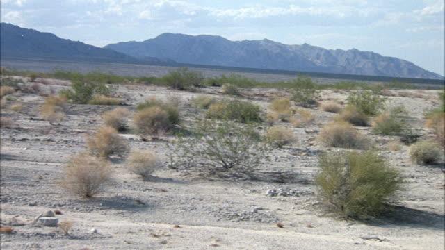 medium angle pan left of desert plain and shrubs, mountains in background. - deserto mojave video stock e b–roll