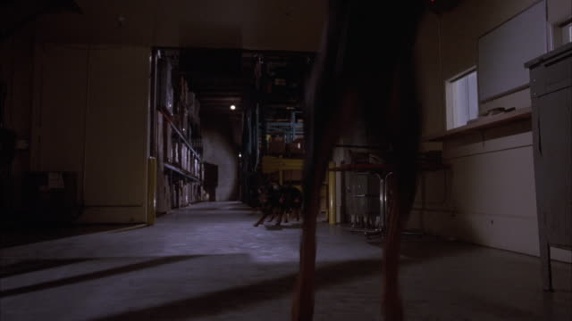 MEDIUM ANGLE OF WAREHOUSE ENTRANCE. FOUR GUARD DOGS APPEAR FROM RIGHT SIDE BEHIND ENTRANCE AND RUN FORWARD, JUMPING TO RIGHT OF CAMERA.
