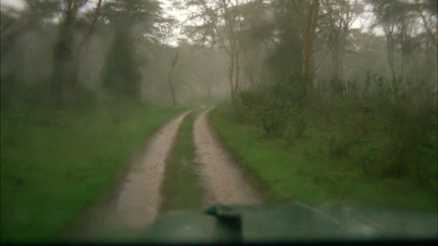 WIDE ANGLE DRIVING POV STRAIGHT FORWARD JEEP OR TRUCK DRIVING ON NARROW DIRT ROAD OR PATH IN JUNGLE OR FOREST. MUD, RAIN ON WINDSHIELD, WINDSHIELD WIPERS MOVE BACK AND FORTH. TREES, BUSHES. HOOD OF CAR VISIBLE THROUGHOUT SHOT. MATCHING R959-2 R960-1 R960-