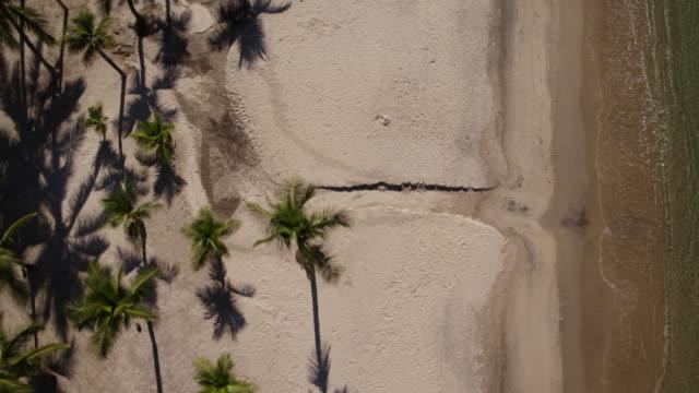 paradisiac view of angra dos reis - coconut palm tree stock videos & royalty-free footage