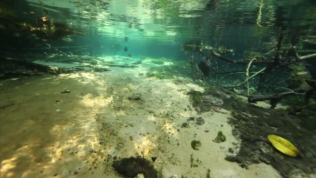 underwater view - 海底点の映像素材/bロール