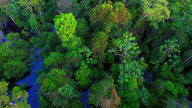 aerial view - tropical rainforest - questioni ambientali video stock e b–roll