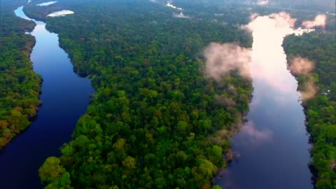 aerial view - tropical rainforest - environmental issues stock videos & royalty-free footage