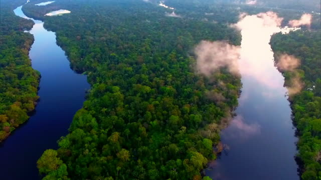 aerial view - tropical rainforest - environmental issues stock-videos und b-roll-filmmaterial
