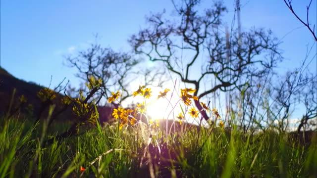 vídeos de stock, filmes e b-roll de low view -  grass and sunflower - paisagem cena não urbana