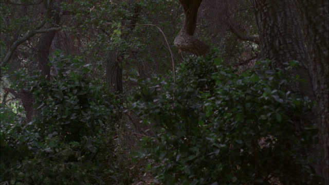 MEDIUM ANGLE OF BUSHES AND SHRUBBERY IN FOREST. COULD BE JUNGLE OR WOODS. TREES. TWO NEANDERTHAL MEN RUN THROUGH CLEARING WITH SPEARS FROM RIGHT TO LEFT. MEN WEAR ANIMAL SKIN CLOTHING. COULD BE CAVEMEN. COULD BE HUNTING.
