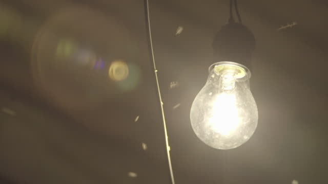 MOSQUITOES FLYING AROUND INCANDESCENT LIGHT BULB