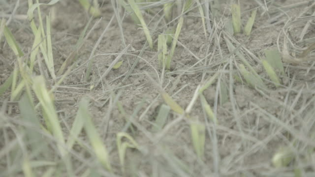 close up -  ants moving around by ground - territorio video stock e b–roll