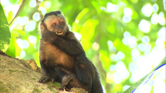 little monkey eating in the tree - mammal stock videos & royalty-free footage