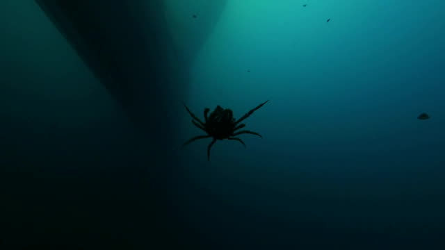 underwater view - close up - spider falling on the sea - seabed stock videos & royalty-free footage