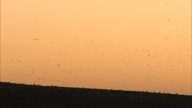 brazil - shore birds and orange sky - animal behaviour stock videos & royalty-free footage