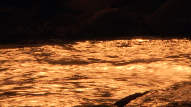 close up - river against the light - wildwasser fluss stock-videos und b-roll-filmmaterial