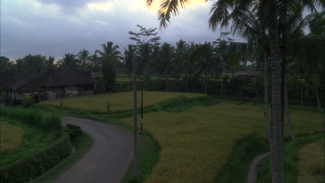 high angle down of road through rice paddies or fields. house with grass thatched roof in bg. palm trees. farmland. tropical. southeast asia. - thatched roof stock videos & royalty-free footage