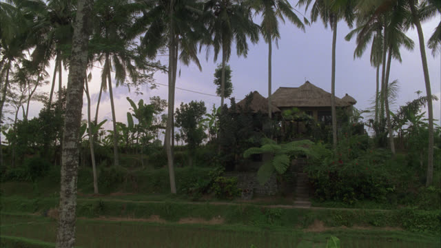 pull back from two story house with thatched roof overlooking rice paddies or fields. palm trees. tropical. southeast asia. farms. country. rural area. - thatched roof stock videos & royalty-free footage