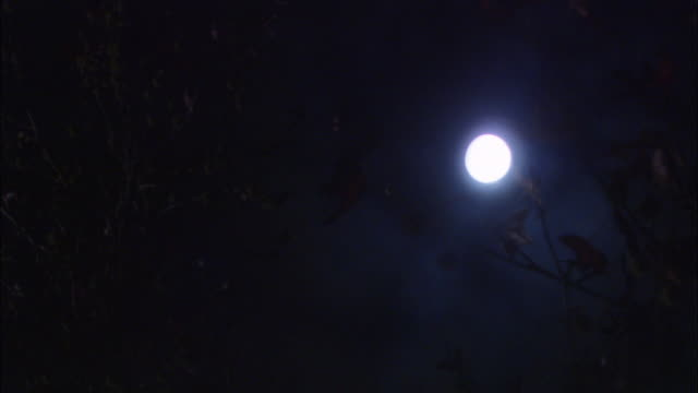 WIDE ANGLE. GLOWING FULL MOON THROUGH TREE BRANCHES. CAMERA MOVES POSITION OF MOON IN SHOT.