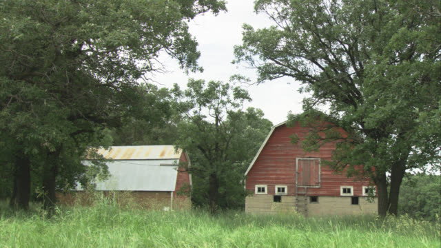 wide angle of old barns behind field of tall grass. could be farm. trees in background. could be elm trees. wind blowing. - barn stock videos & royalty-free footage