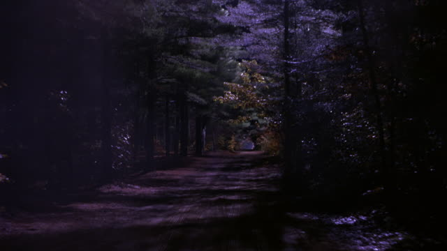 wide angle driving pov straight back of forest dirt road or path. moonlight breaks through forest trees to ground. - ländliche straße stock-videos und b-roll-filmmaterial