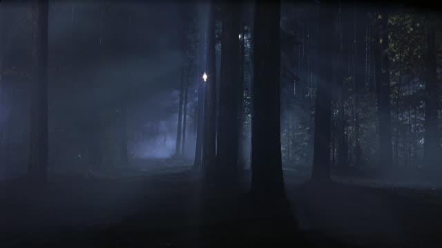 wide angle of forest. thick fog visible between tall trees. lights shine from distance. - fog stock videos & royalty-free footage