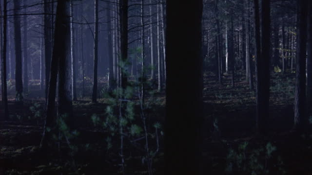 wide angle walking pov straight forward in forest. pov weaves around trees. search light shines around forest. could be used for a helicopter searchlight in a missing person search. - searchlight stock videos & royalty-free footage
