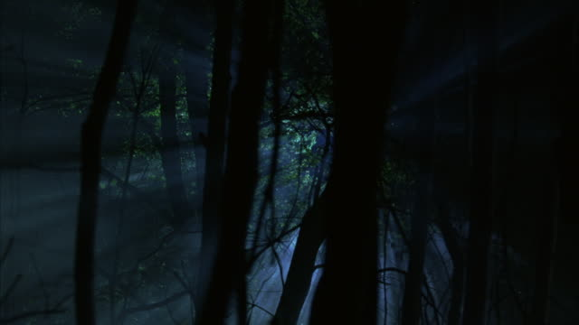 vidéos et rushes de tracking shot of moon or light in sky through tree branches. could be forest, woods, or swamp. - bois