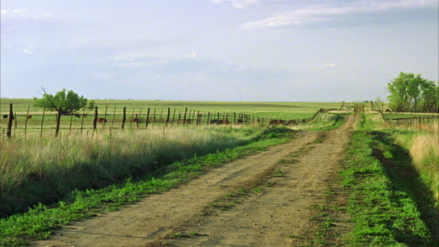 wide angle of country road. fence lines both sides of the road. cows graze in open field. could be used for any private road near a farm or ranch. dirt roads. - open field stock videos & royalty-free footage