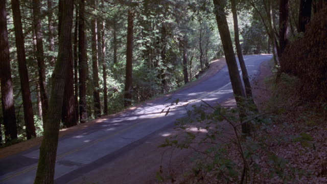 medium angle of forest and two lane narrow road,  in foreground. see long tree stumps and partial leaves  in foreground. see dry weeds, dead leaves, shrubs, and bushes. - ceppaia video stock e b–roll