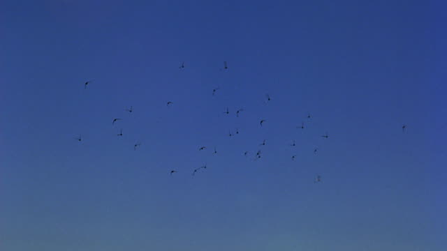 hand held angle of a flock of birds flying over a mobile home in a trailer park in the mountains above malibu.  could be any coast along the pacific ocean in california. pacific coast, coastline. - trailer home stock videos & royalty-free footage