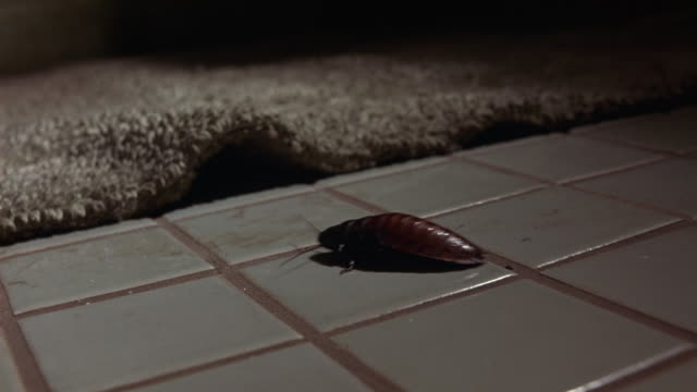 close angle of tiled bathroom floor with bathmat shows cockroach crawl across floor under rug. insects. - ラグ点の映像素材/bロール