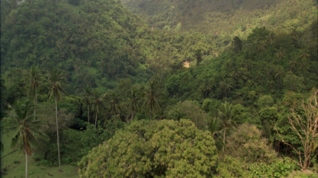 AERIAL FLYING ALONG MUDDY RIVER THROUGH TREES AND PALM TREES, TROPICAL PLANTS IN RAINFOREST OR JUNGLE. GREEN, LUSH.