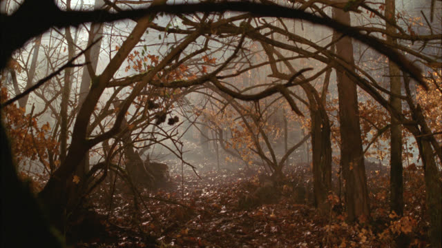 stockvideo's en b-roll-footage met wide angle of bare tree branches and autumn leaves in woods or forest. foggy. - bare tree