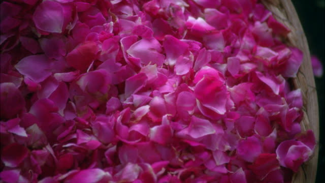 CLOSE ANGLE OF BASKET OF FLOWER PETALS. HAND GRABS A HANDFUL.