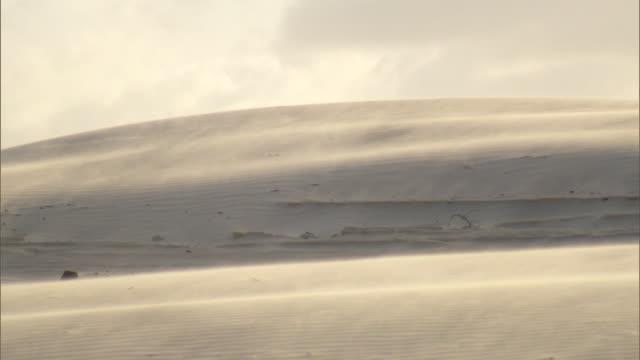 brazil - genipabu - sandstorm - sandstorm stock videos & royalty-free footage