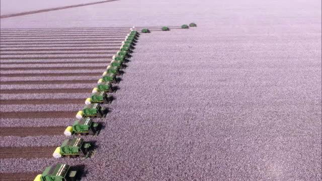 vídeos de stock, filmes e b-roll de cotton harvesting - aerial view - cotton