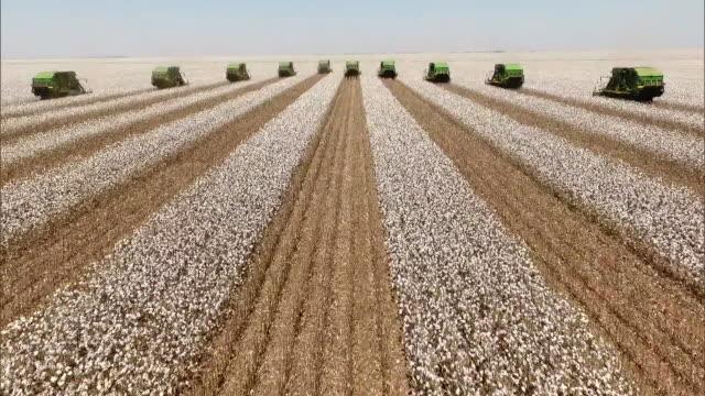 vídeos de stock, filmes e b-roll de cotton harvesting - aerial view - agricultura