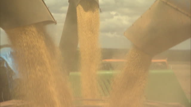 soybeans falling from combine auger - soya bean stock videos & royalty-free footage