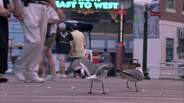 vídeos de stock, filmes e b-roll de close angle of black and white seagulls flapping around near the ground on the boardwalk. - atlantic city