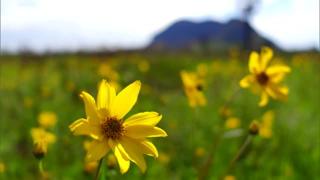 sunflower - 花びら点の映像素材/bロール