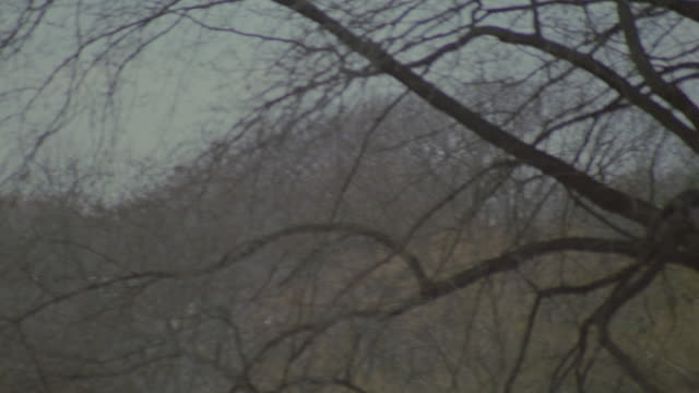medium angle of trees with no leaves in central park. camera pans left to san remo apartments over tops of trees. apartment buildings. - remo stock videos and b-roll footage
